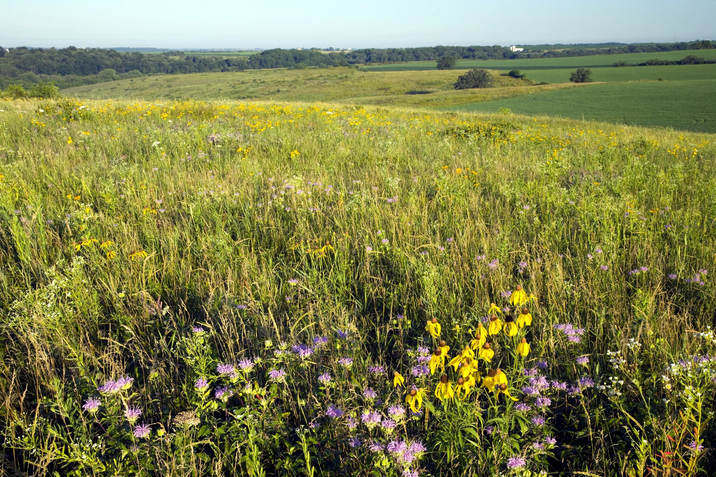 16/6/2021· most native prairies found today in wisconsin are small remnants that are less than 10 acres in size. Prairie Restoration In Wisconsin Bright Spot For Native Plants Birds