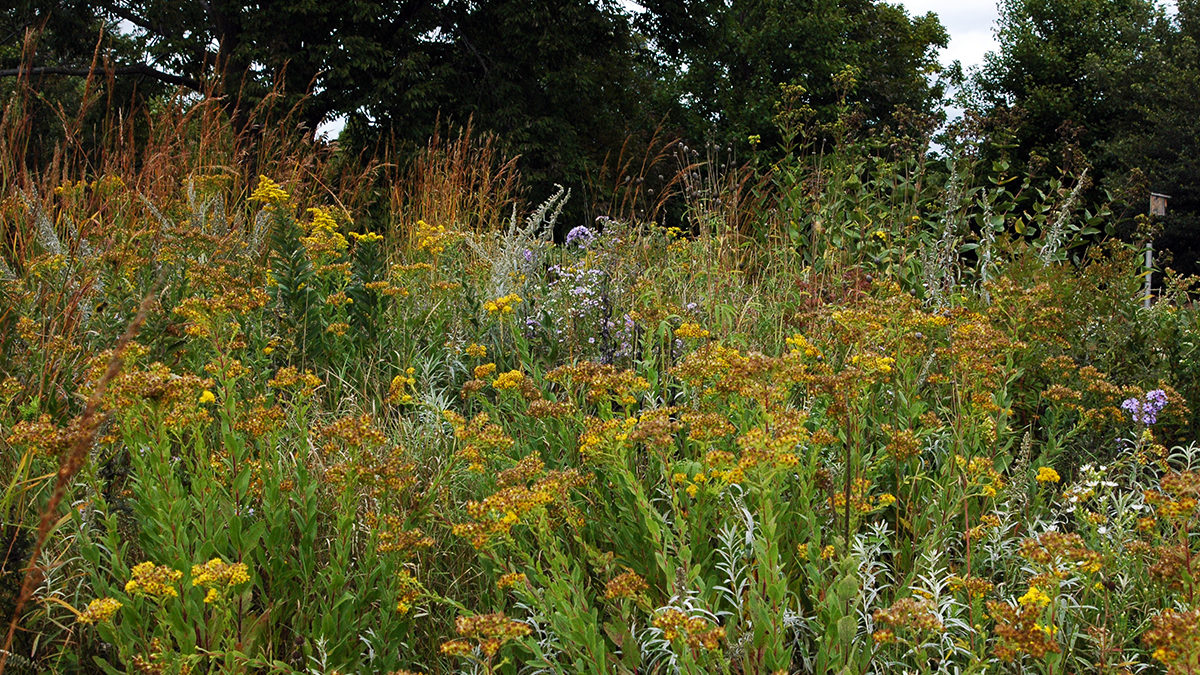 Very few exceed 50 acres, too small to support a full … Gardening With Native Plants Fall Practices And Perspective Uw Arboretum