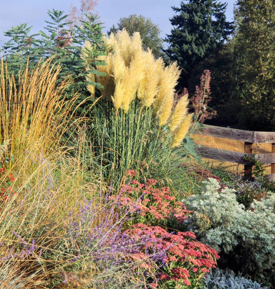 Prairie nursery is a native plant nursery offering a wide selection of native plants, wildflowers, grasses, shrubs & ferns for ecological gardens & landscapes. Best Ornamental Grasses For Midwest Gardens Midwest Living