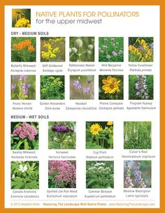 Plant native plants to help nature. 260 Wisconsin Native Plants Ideas Native Plants Plants Perennials